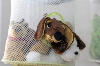Freies Spiel - Hund schaut aus dem Netz